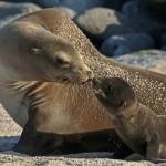 loen marino y su cria