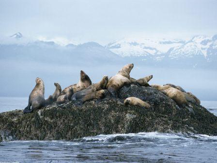 grupo de leones marinos