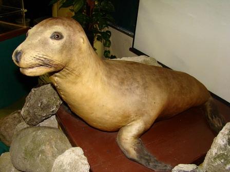 leon marino japones