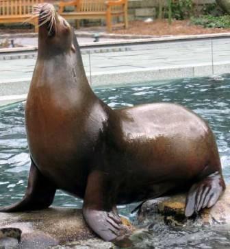 leon marino posando