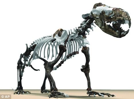 leon marino evolucion